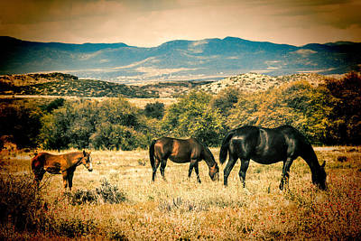 Photograph - Grazing by Fred Larson