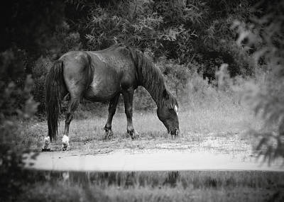 Photograph - Grazing Free by Eduard Moldoveanu