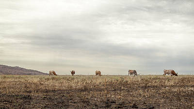 Photograph - Grazing by Gina  Zhidov