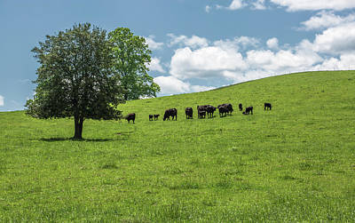 Photograph - Grazing Greener Pastures Brevard Nc by Donnie Whitaker
