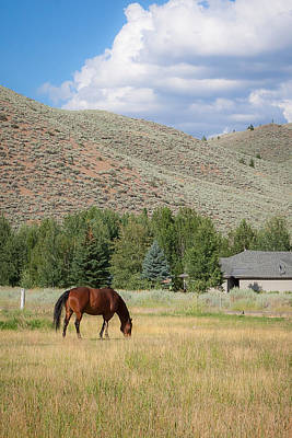 Photograph - Grazing Horse by Dave Hall
