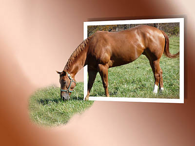 Oob Photograph - Grazing Horse by Eleanor  Bortnick