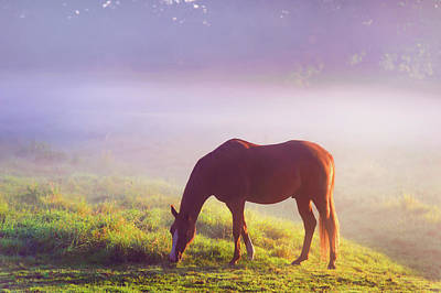 Photograph - Grazing Horse. Rural Holland by Jenny Rainbow