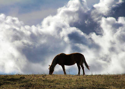 Grazing Horse Art Print by Stephanie Laird