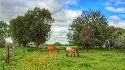 Photograph - Grazing Horses by Dan Miller