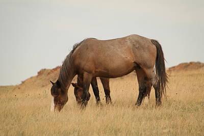 Caravaggio - Grazing horses in Medaora by Jeff Swan