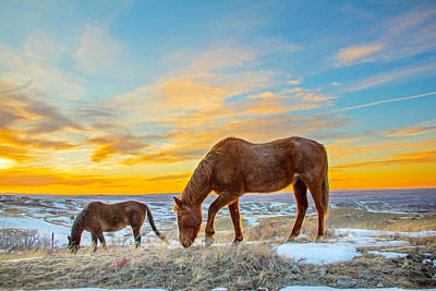 Grazing Horses In Sunset Original by Sam Sherman