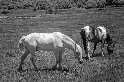 Photograph - Grazing Horses by Susan McMenamin