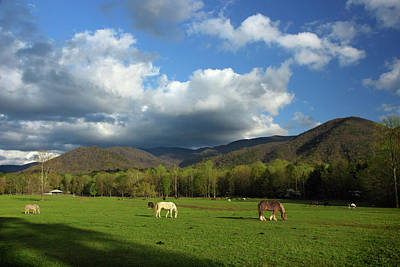 Photograph - Grazing In Cades Cove by Michael Eingle