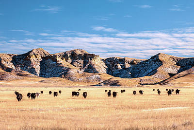Angus Steer Photograph - Grazing In The Badlands by Todd Klassy