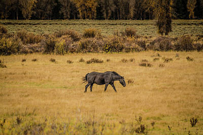 Photograph - Grazing In The Fall 2 by Teresa Wilson