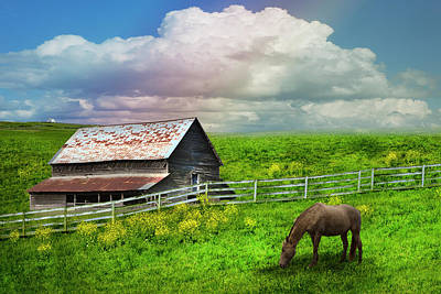 Photograph - Grazing In The Grass  by Debra and Dave Vanderlaan