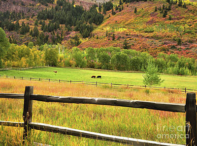 Grazing In The Grass Art Print by Jim Chamberlain