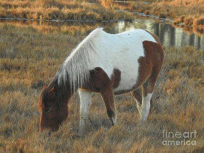 Photograph - Grazing In The Grass by Scott Cameron