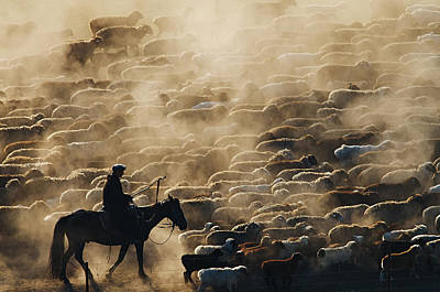 Grazing Photograph - Grazing In The Morning by Adam Chen