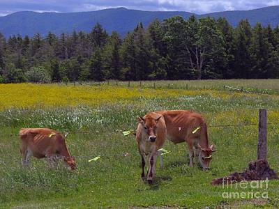 Photograph - Grazing In The Pasture by Donna Cavanaugh