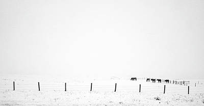 Photograph - Grazing In The Snow by David Pantuso