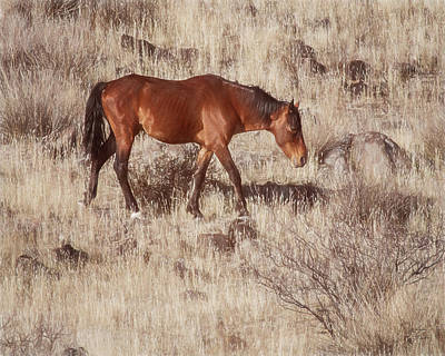 Photograph - Grazing In The Winter Grass by Teresa Wilson