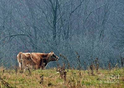 Photograph - Grazing In Winter by Christian Mattison