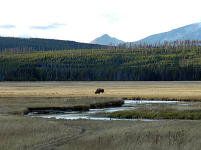Photograph - Grazing In Yellowstone by Sarah Egan