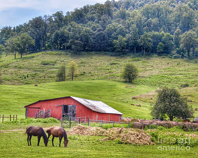 Photograph - Grazing  by Kerri Farley