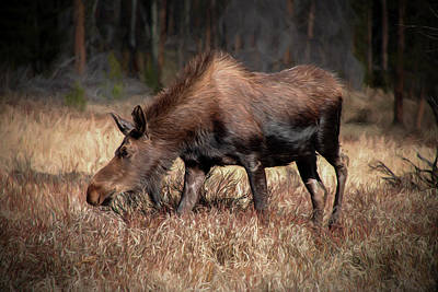 Photograph - Grazing Moose Painterly by Teresa Wilson