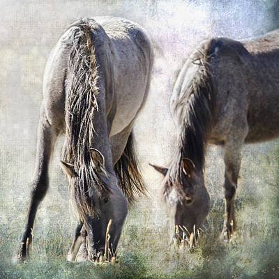Photograph - Grazing On Light And Freedom by Belinda Greb