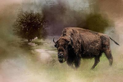 Photograph - Grazing On Tuesday Buffalo Art by Jai Johnson