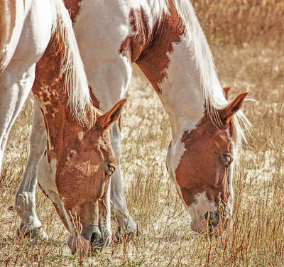 Photograph - Grazing Paint Horses  by Jennie Marie Schell