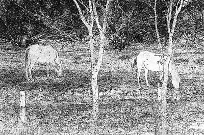 Photograph - Grazing Pair by Erich Grant