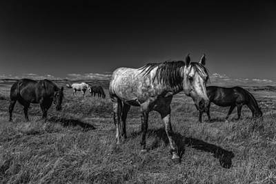 Photograph - Grazing by PhotoWorks By Don Hoekwater