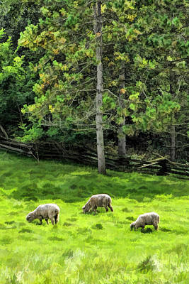 Grazing Sheep At Old World Wisconsin Art Print