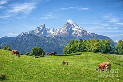 Photograph - Grazing The Alps by JR Photography