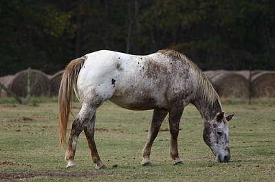 Art Print featuring the photograph Grazing Time by Kim Henderson