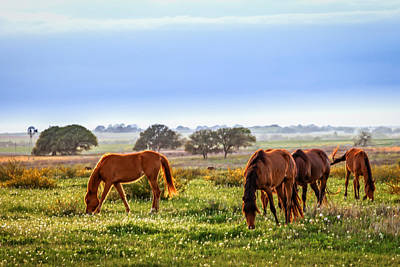 Photograph - Grazing Time by Melinda Ledsome