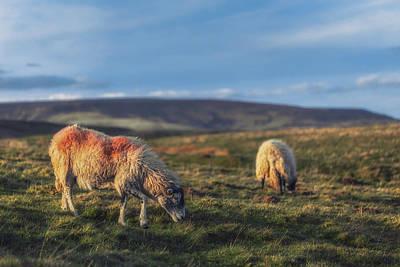 Peak District Photograph - Grazing With Suspicion by Chris Fletcher