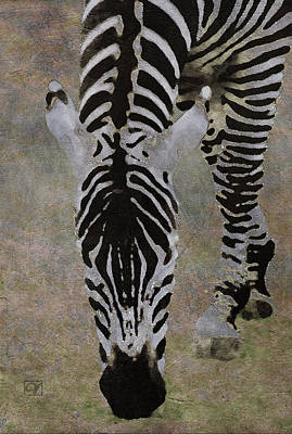 Digital Art - Grazing Zebra by Jean Moore
