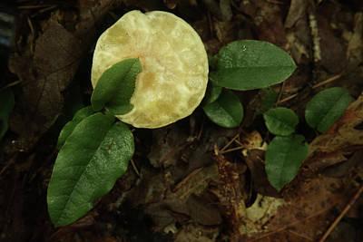 Photograph - Greasy Slick Mushroom by Douglas Barnett