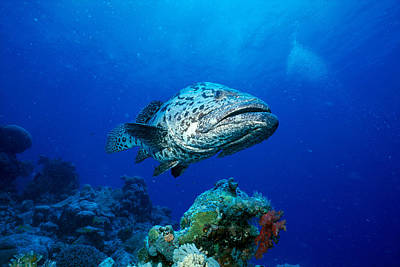 Photograph - Great Barrier Reef by Peter Stone - Printscapes