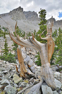 Photograph - Great Basin Bristlecone Loop Trail by Ray Mathis