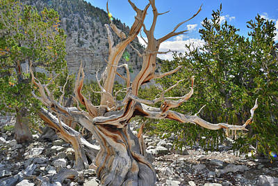 Photograph - Great Basin Np by Ray Mathis