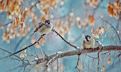 Wild Animal Photograph - great birds sparrow on a winter branch. Snowy day by Oksana Ariskina