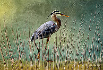 Digital Art - Great Blue At The Beach by Lois Bryan
