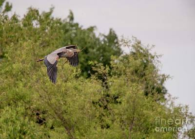 Photograph - Great Blue Heron - 14 by David Bearden