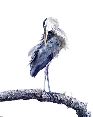 Photograph - Great Blue Heron 2 by Lizi Beard-Ward