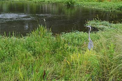 Photograph - Great Blue Heron 2 by Warren Thompson