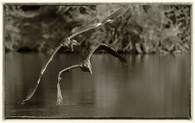 Photograph - Great Blue Heron 2146-073118-3cr-e by Tam Ryan