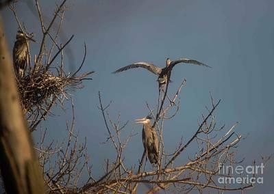 Photograph - Great Blue Heron - 3 by David Bearden