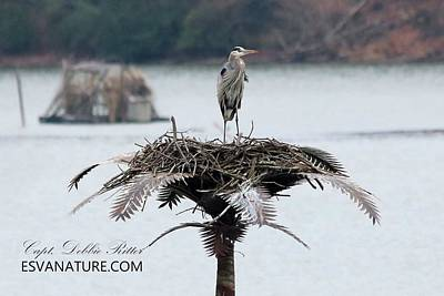 Photograph - Great Blue Heron 3770 by Captain Debbie Ritter