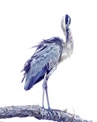 Photograph - Great Blue Heron 4 by Lizi Beard-Ward